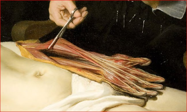 lliçó d'anatomia Nicolaes Tulp Rembrandt